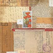 Eschscholzia by Pamela Towns